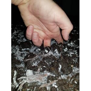 mushroom casing soil