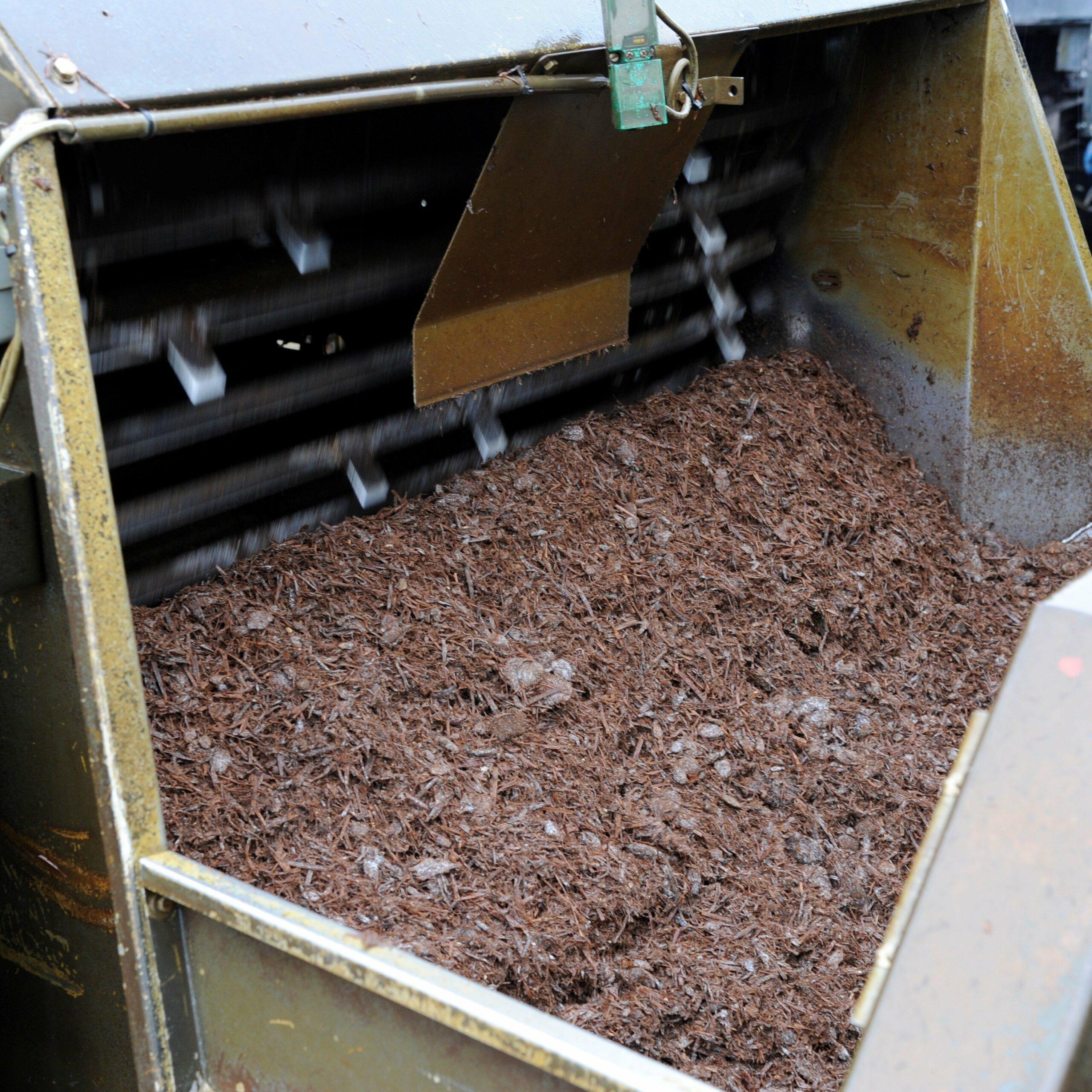 Champignon compost fase 3