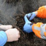 Mushroom Composting Phase 1